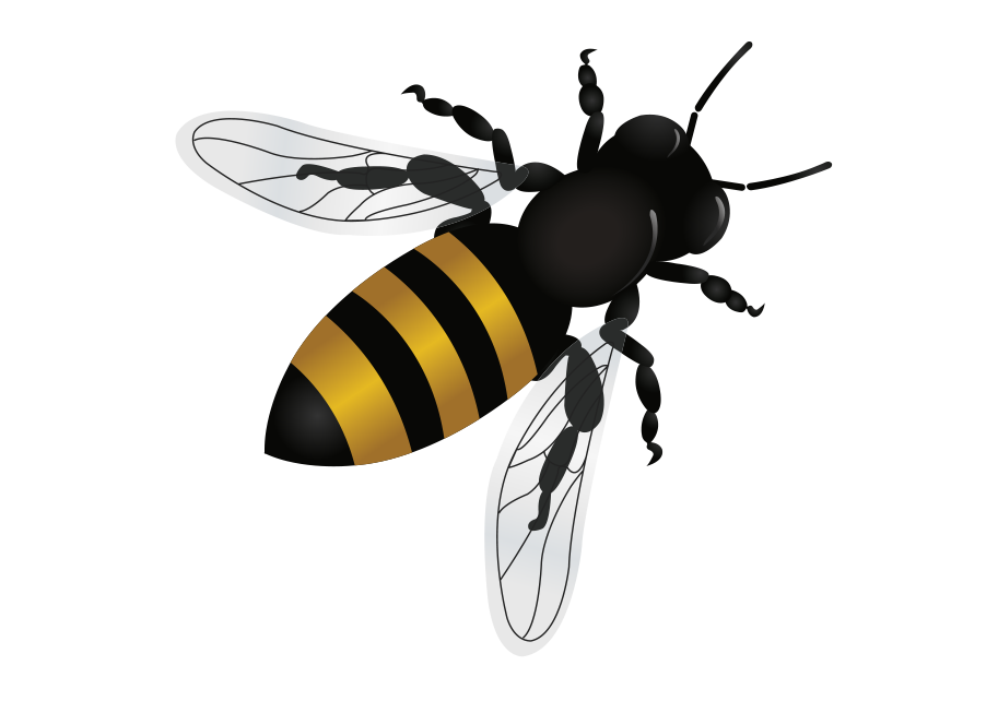 Bee Removal Tempe Arizona