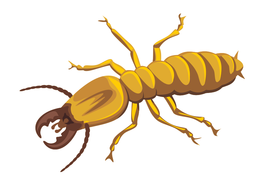 Termite Treatment Scottsdale Arizona