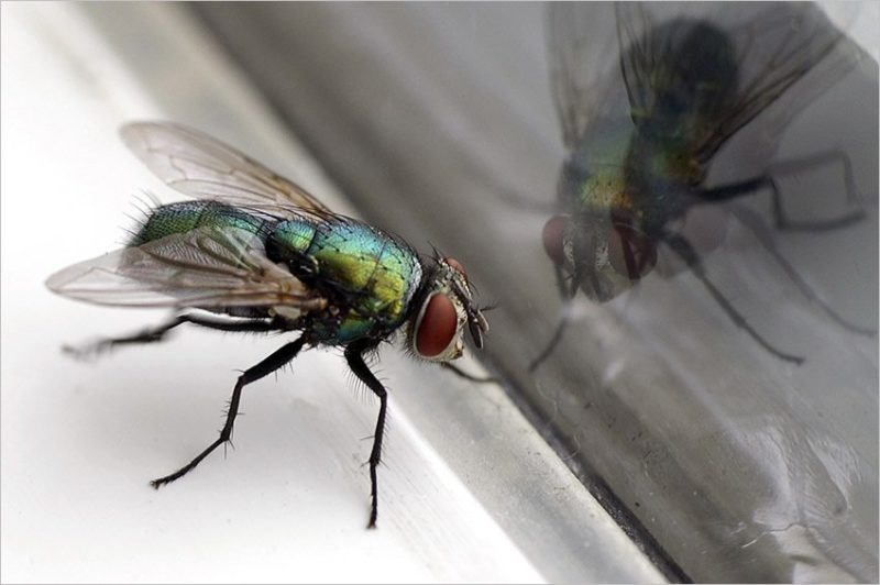 Flying Insect Control Scottsdale
