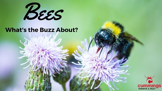 Bees: Why All the Buzz?