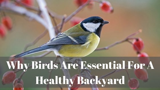 Birds Are Essential for Home Pest Control