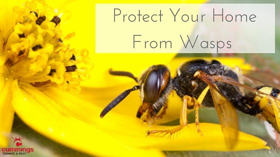 Stop Wasps from Building Nests At Home