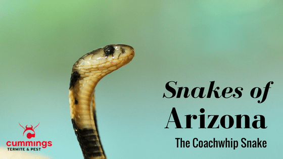 Snake Removal Paradise Valley