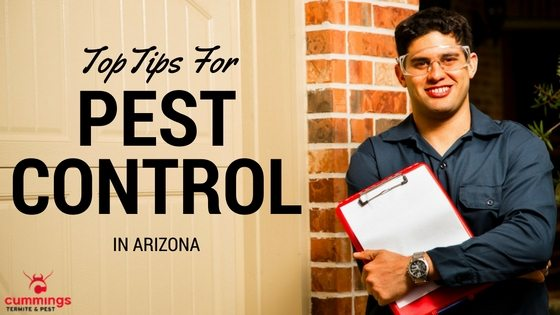 Top Tips For Home Pest Control In Arizona