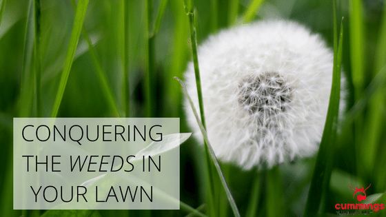 Weed Control Service For Your Lawn