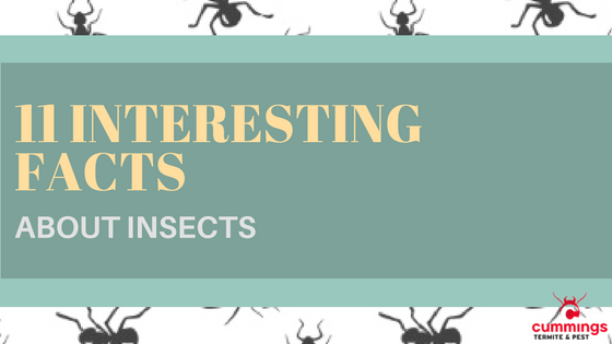 11 Facts From Fountain Hills Pest Control