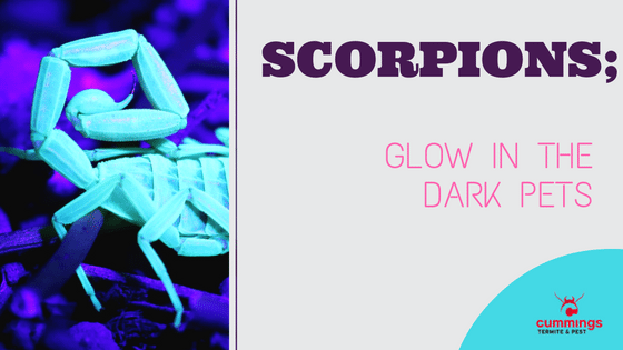 Scorpions:  Glow in the Dark Pets!