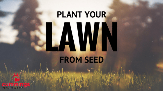 Plant your Lawn from Seed