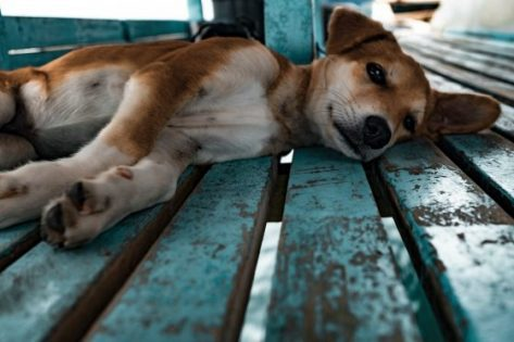 5 Things You Can Learn from Your Dog