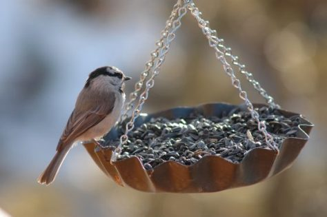 Top 5 Reasons to Get Into Bird Feeding