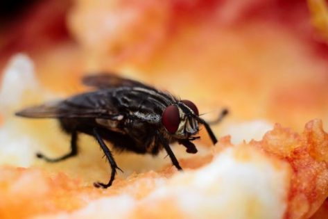 Stop Fruit Flies From Entering Your Home