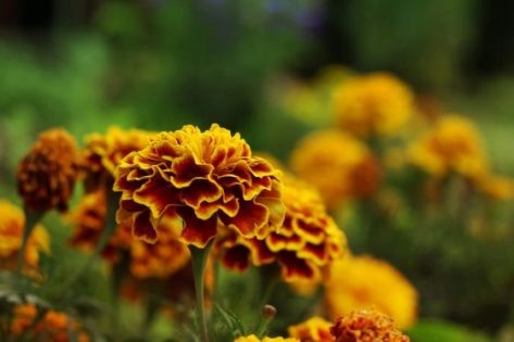5 Plants That Keep Pests Out Of Your Garden