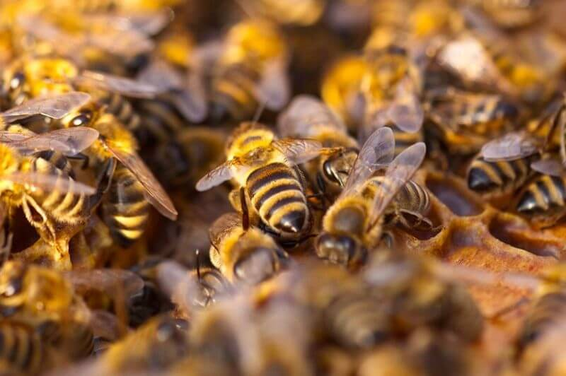 Here Come the Bees