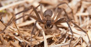 Did Someone Say Spider? Here is a List of Common Spiders in Arizona