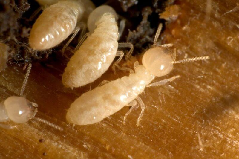 Active Season For Termites